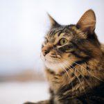 【最低限必要な金額】猫を飼うのに必要な費用っていくらくらい?