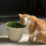 [猫にとって安全?危険?]部屋に置いていて問題ない観葉植物は?