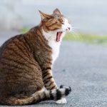 【家猫】猫の散歩はあり?なし?【メリットとデメリット】