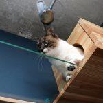 里親募集もやっている東京周辺のおすすめ猫カフェ一覧