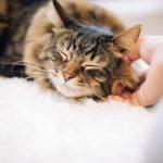 猫アレルギーでも猫は飼えるのか?【原因は?どんな症状?対策はある?】