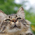 【人間だけじゃない!】猫の花粉症【鼻水/くしゃみ/目やに/皮膚炎】