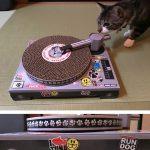 【DJ猫】爪とぎターンテーブルが我が家にやってきた【意外な結末に…】