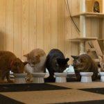 猫がエサを食べてくれない!食欲不振の原因と対処法