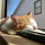 【熱中症注意】効果的な猫の夏バテ、暑さ対策とは!?